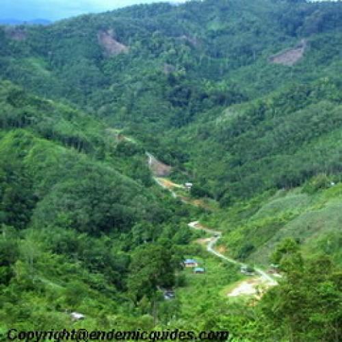 Crocker Range National Park Sabah Endemicguides